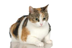Cat Names For Girl Calicos